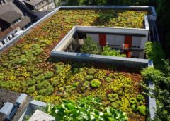 Research highlights growing trends of green roofs and green concrete